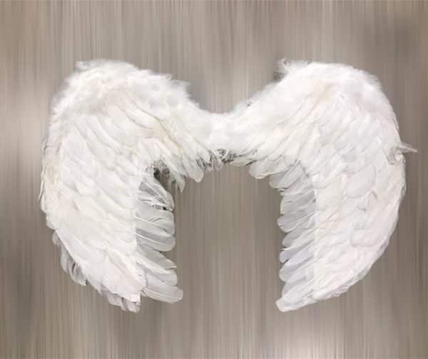 Alas de ángel pequeñas
